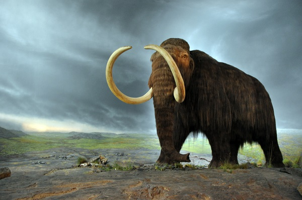 a woolly mammoth on the field