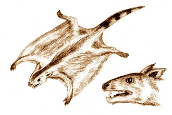 gliding mammals illustration