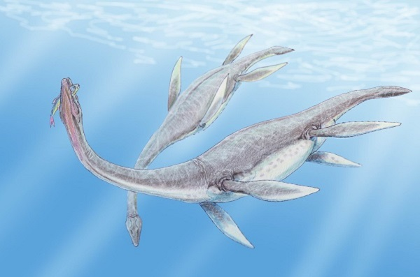 150 million year old plesiosaurus remains have been discovered on the tip of Antarctica.