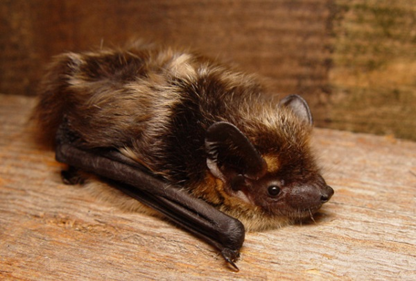 Millions-year-old burrowing bat species discovered in a New Zealand forest.